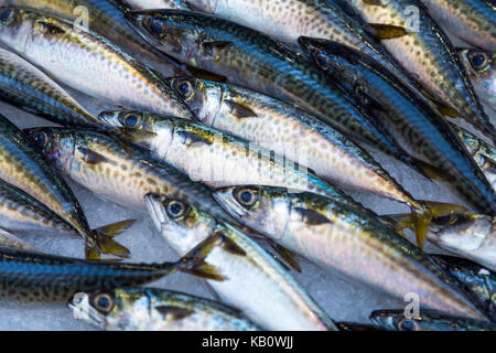 Fresh sardines on ice for sale at a fish market stall, Marseille, France - Stock Photo