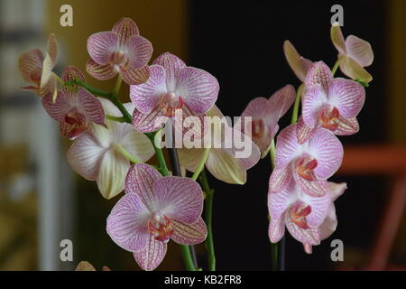 Orchid - Orquidea - Stock Photo