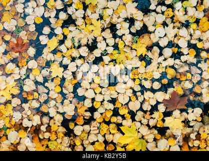 Background of yellow leaves floating on surface of pond - Stock Photo