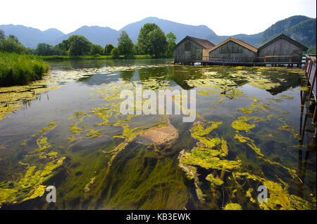 Alga pest in the Kochelsee, caused by algae overfertilization on the shore near Schlehdorf, - Stock Photo