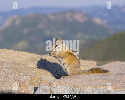 Cute small squirrel eating the nut - Stock Photo