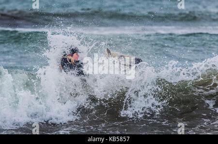 Horseback riding in the sea, Iceland Icelandic horse and rider at Longufjorur beach, Snaefellsnes Peninsula, Iceland - Stock Photo