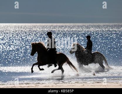 Horseback riding on Longufjorur Beach, Snaefellsnes Peninsula, Iceland - Stock Photo