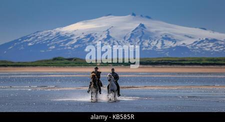 Horseback riding on Longufjorur Beach, Snaefellsjokull Glacier in the background, Snaefellsnes Peninsula, Iceland - Stock Photo