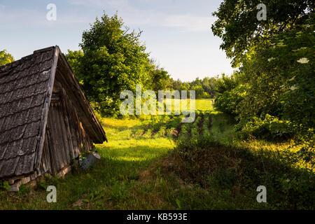 Europe, Poland, Podlaskie Voivodeship, Knyszynska Forest - Stock Photo