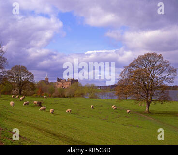 Lovely spring view of Linlithgow Palace, Linlithgow, West Lothian - Stock Photo