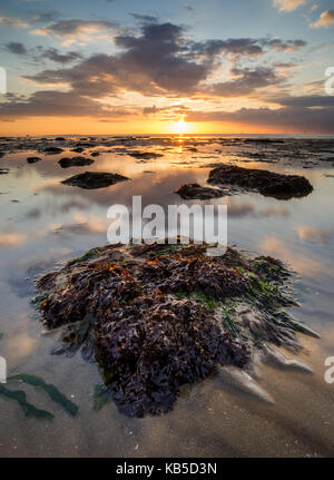 View of sandy beach and seaweed covered rock at sunset, Reculver, Kent, England, United Kingdom, Europe - Stock Photo