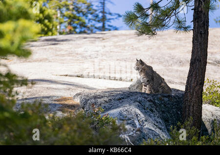 Undomesticated Cat sitting on a rock in a rural place - Stock Photo