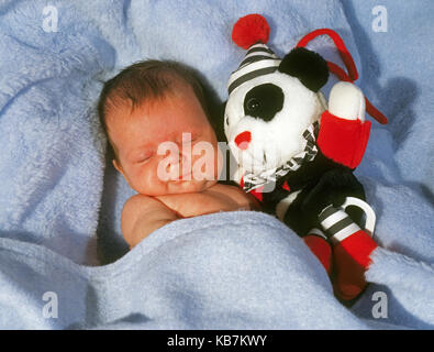 A two-week old baby girl holds her toy panda bear as she takes a nap in a blue blanket. - Stock Photo