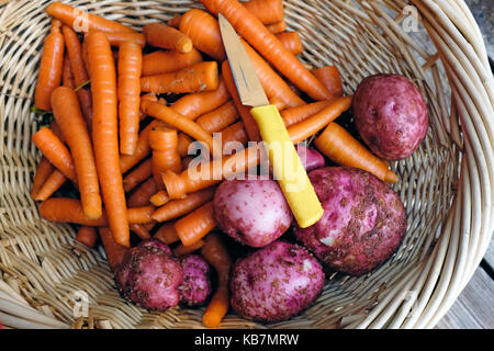 Fresh from the garden carrots, and red potatoes. - Stock Photo