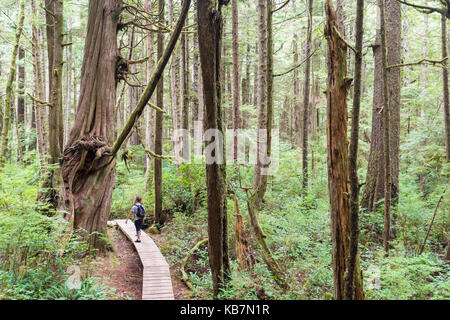 Red cedar on Willowbrae Trail in Vancouver Island temperate rainforest - Stock Photo