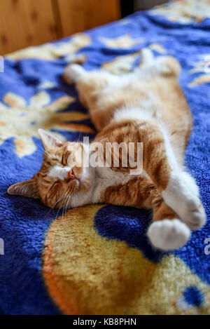 A young cat lying in a funny pose on the couch. - Stock Photo