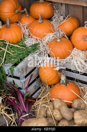 Pumpkin and potato display at Daylesford Organic farm shop autumn festival. Daylesford, Cotswolds, Gloucestershire, - Stock Photo
