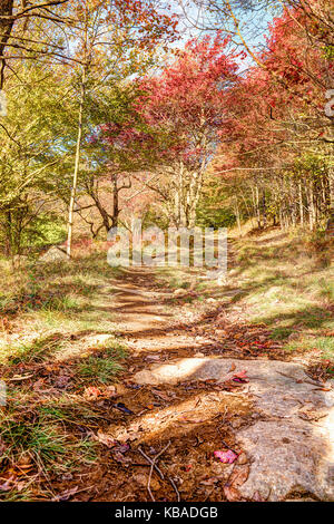 Trail path in autumn forest on hill going up in Dolly Sods, West Virginia - Stock Photo