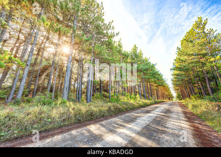 Vanishing dirt paved rocky road through pine tree forest in Dolly Sods, West Virginia in autumn with shadows, sunburst - Stock Photo