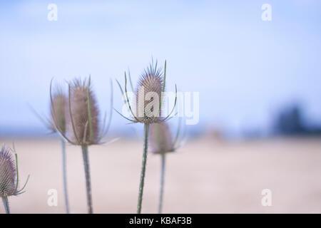 Flowers in an field - Stock Photo