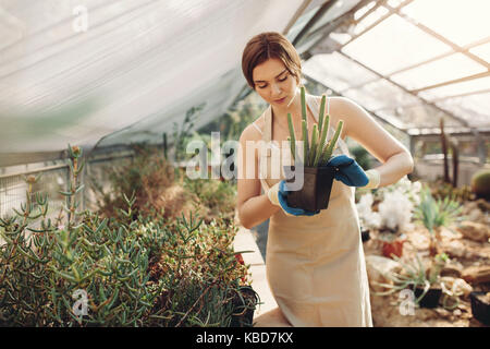 Shot of young woman holding a cactus potted plant in greenhouse. Beautiful gardener holding a potted cactus at plant - Stock Photo