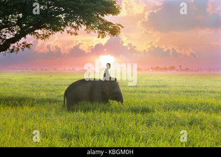 Thailand mahout and elephant are in the middle of the rice field with tree behind the sunrise on the beuatiful side. - Stock Photo