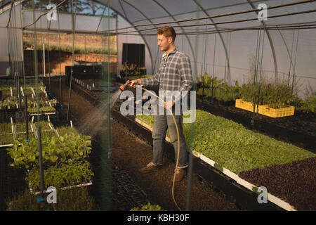 Young farmer watering plants in greenhouse - Stock Photo