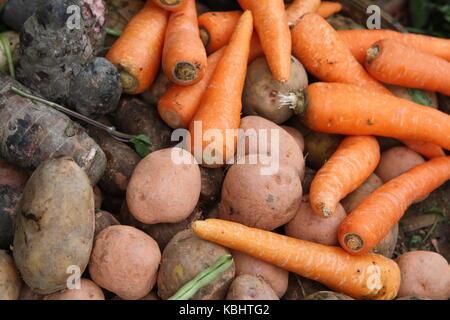 Wurzelgemüse - Carrots - Potatos auf einem Markt - Stock Photo