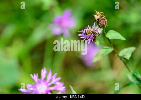 Undergrowth flowers - Stock Photo