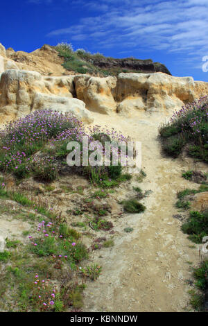 A beachside pathway leads up a sandy cliff. - Stock Photo