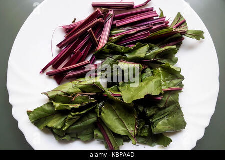 Raw Beetroot Leaves and Stems prior to cooking - Stock Photo