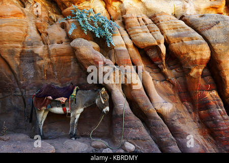 Donkey rest at colourful rock-formations in Petra, Wadi Musa, Jordan - Stock Photo