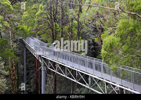 Tree top walkway through the canopy at Otway Fly, in the Otway rain forest, Victoria, Australia. - Stock Photo