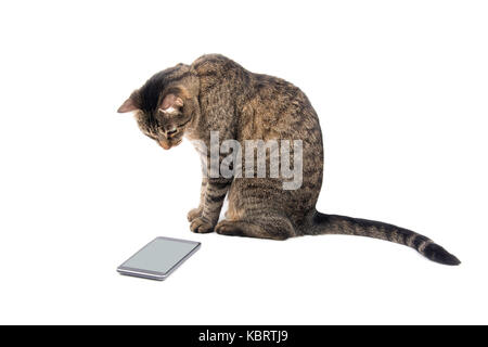 Brown tabby cat staring keenly at a smart phone, on white - Stock Photo