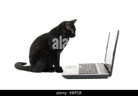 Black cat staring at a laptop screen, on white background - Stock Photo