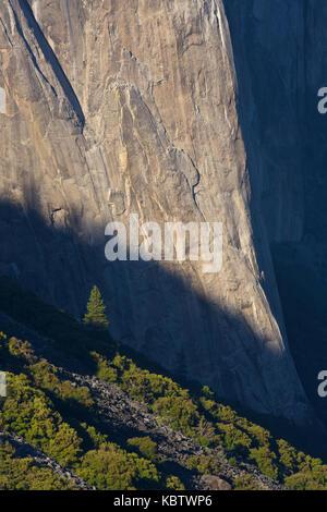 Lone tree at the base of El Capitan, Yosemite - Stock Photo