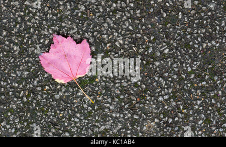 Lonely colourful fallen autumn leaf on a pavement - Stock Photo