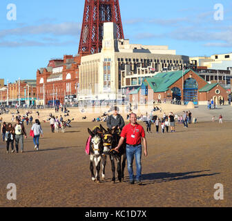 children enjoying donkey rides on the beach in blackpool, england, uk. - Stock Photo