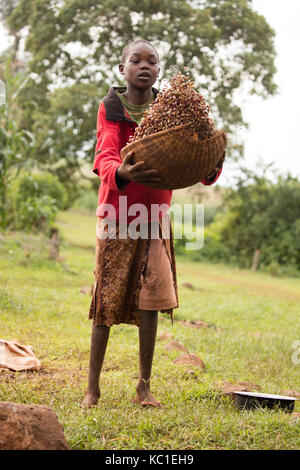 Girl winnowing beans, Kenya - Stock Photo