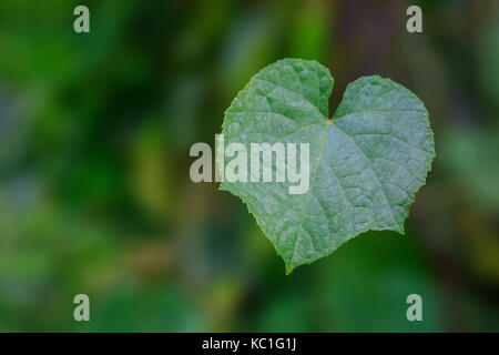 Green Leaf in Heart Shape with Blurry Background. - Stock Photo