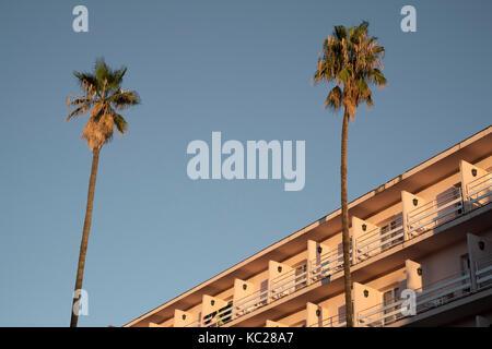 Palm tress against a clear blue sky outside the Guitart Rosa hotel, Lloret de Mar - Stock Photo