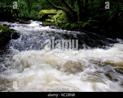 Golitha Falls on the River Fowey through the ancient oak woodland of Draynes Wood, Bodmin, Cornwall, UK - Stock Photo