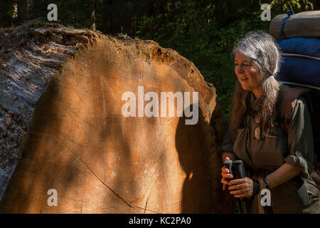 Karen Rentz with inscription saying 'This Tree is 307 (ish) Years Old!', on a fallen Western Redcedar, Tsuga heterophylla, - Stock Photo