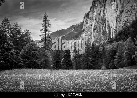 Monochrome view on spring forest with pine trees, waterfalls, mountains and sky with clouds, Switzerland. Countryside - Stock Photo