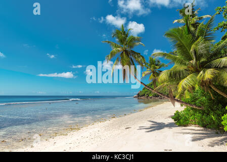 Coconut Palm trees on white sandy beach in Seychelles. - Stock Photo