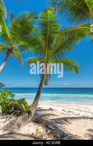 Palm trees and tropical beach - Stock Photo