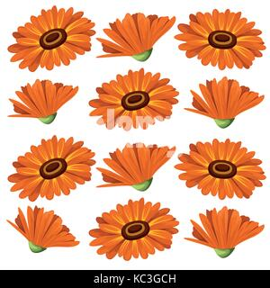 Vector illustration calendula flowers on white background. Medicinal herbs in sketch style Web site page and mobile - Stock Photo