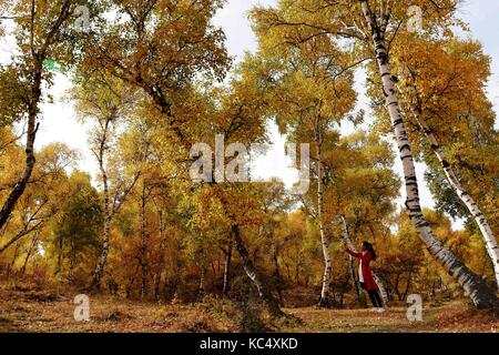 Bayan Nur, China's Inner Mongolia Autonomous Region. 3rd Oct, 2017. Tourists walk in Dahuabei forest area in Bayan - Stock Photo