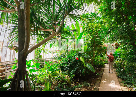 Botanical garden Valencia Spain, a woman visiting the Jardin Botanico walks through a large greenhouse full of tropical - Stock Photo