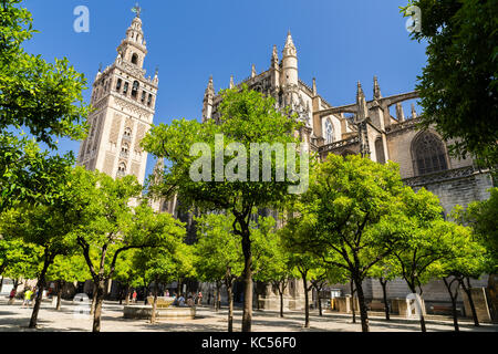 Patio of oranges, Patio de Naranjos, La Giralda, former minaret, bell tower of the Cathedral of Seville, Catedral - Stock Photo