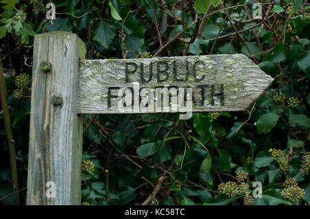 Old wooden footpath signpost with wooden pegs and grain showing in Suffolk countryside with mature green ivy and - Stock Photo