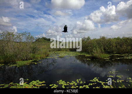 Everglades National Park in Florida is home to an abundant array of wildlife. - Stock Photo
