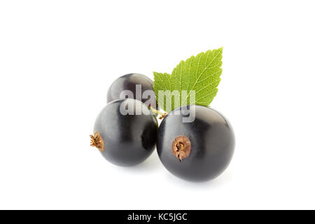 Black currant berries with leaves on white - Stock Photo