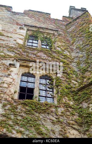 Virginia creeper over castle facade - Stock Photo